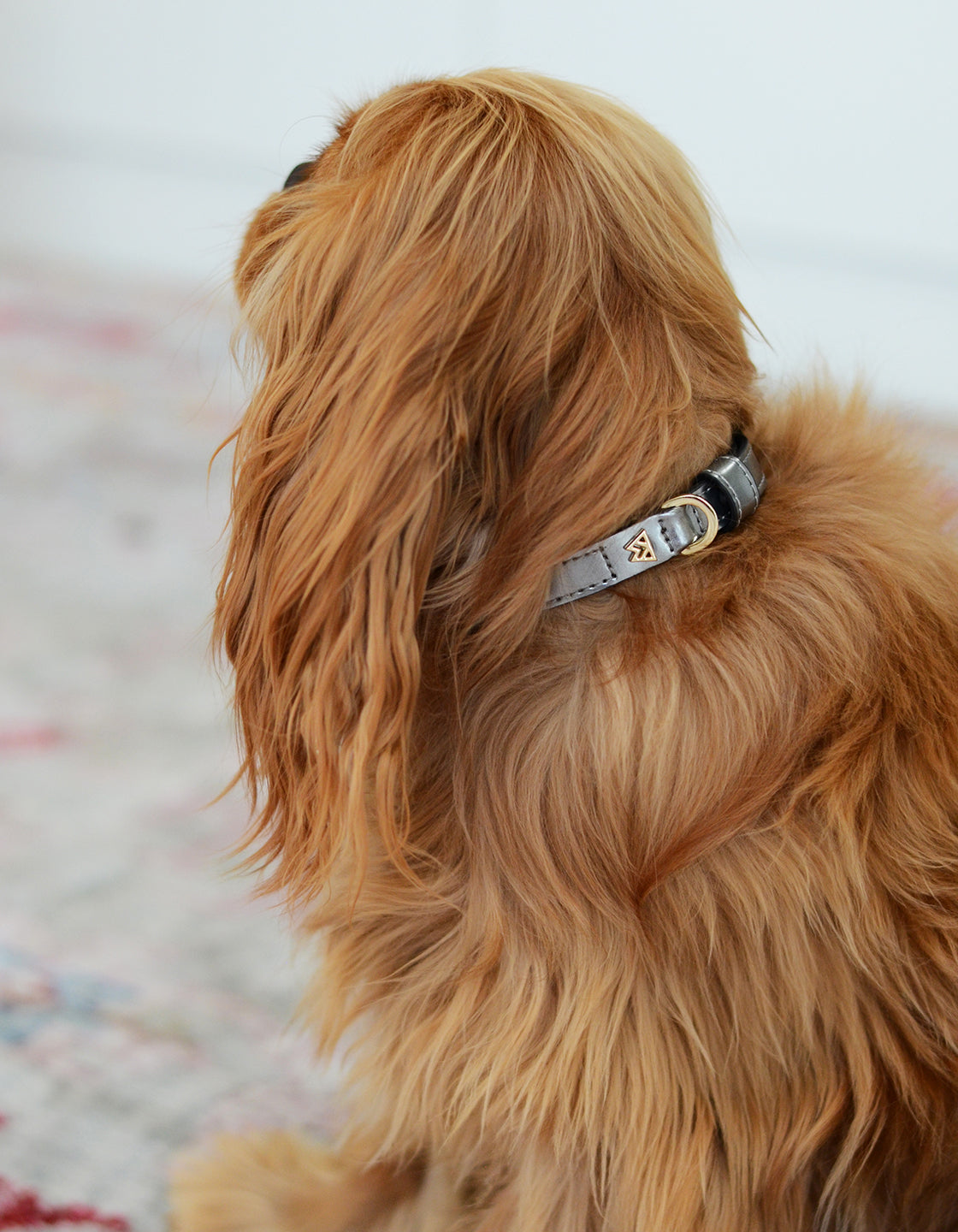 Cloud K9 Collar in Silver Patent - Lifestyle
