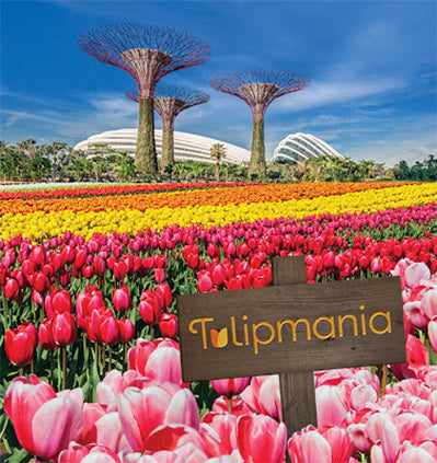 Gardens by the bay Singapore Tulipmania Tulip Flowers Exhibit