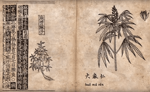 Ancient Cannabis Medicine