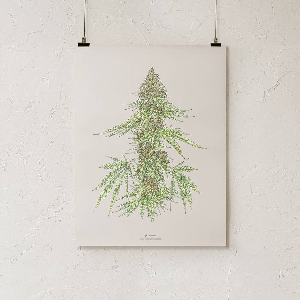 Botanical Cannabis Print