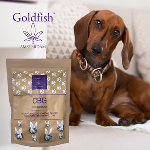 CBG Dog Treats