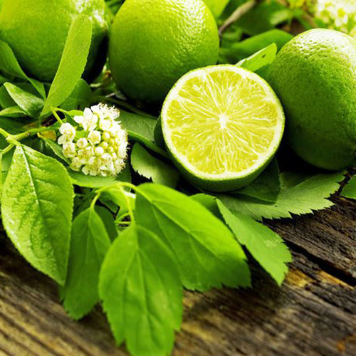 French Lime Blossom Fragrance Oil