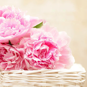 Pink Peony & Blush Suede Fragrance Oil for Candles by Truly Personal.