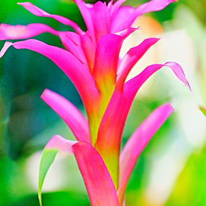 Tropical Blooms Fragrance Oil by Truly Personal