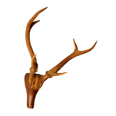 Beech Wood Stag's Head with applied real antlers, French, mid 19th century