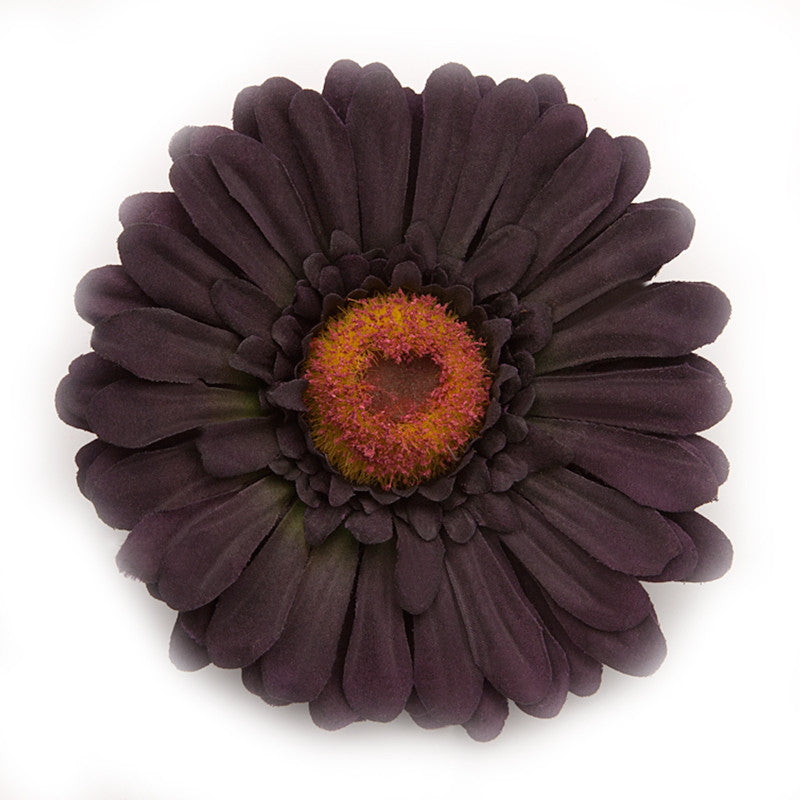Big Daisy, Lilac dark