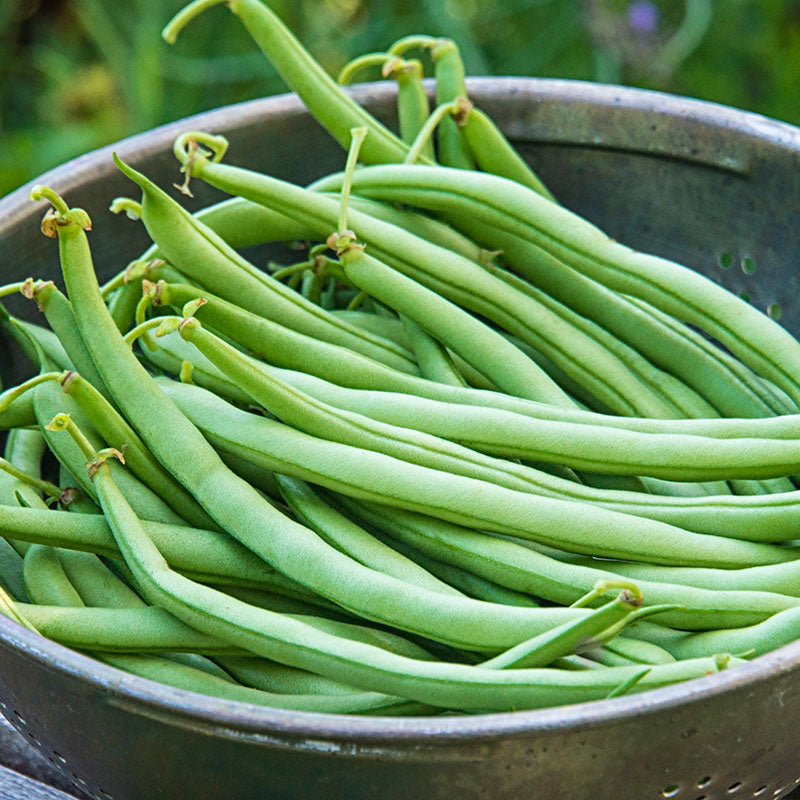 Blue lake peas, beans