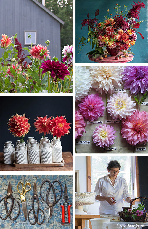 Dahlia Workshop