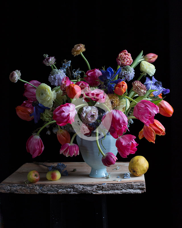 Tulips, Ranunculus and Scabiosa #7376