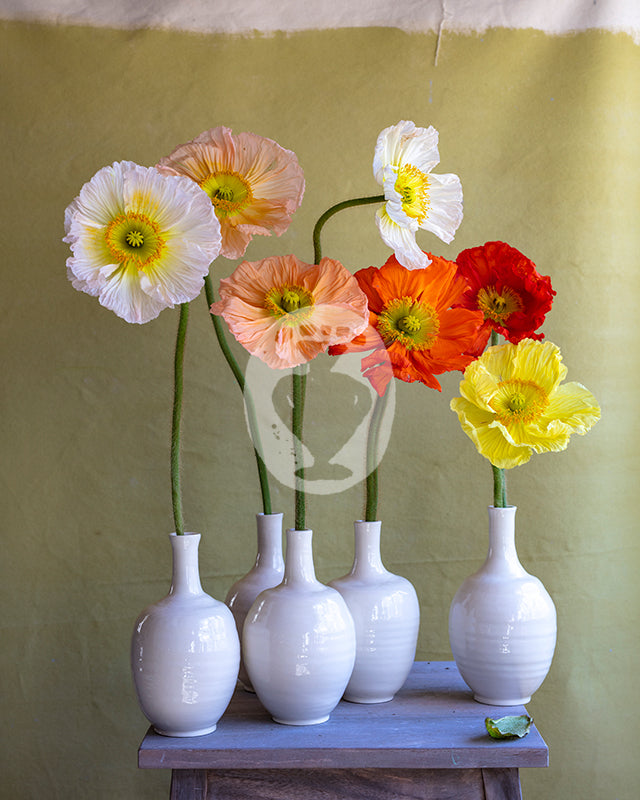 Poppies and Pencil Vase #7339