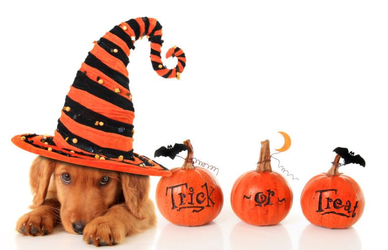 Happy Howl-O-Ween From VOC And Our Awesome Patients!