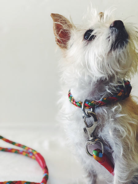 Tonto Collar in Lollypop