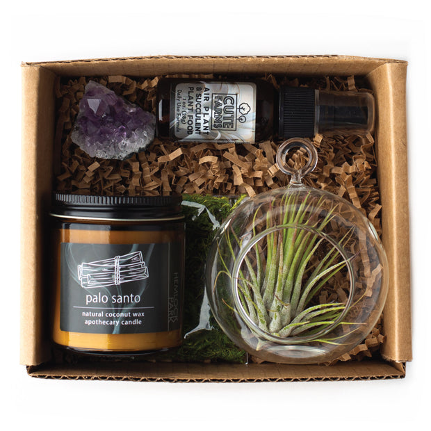 Air Plant + Candle Gift Kit