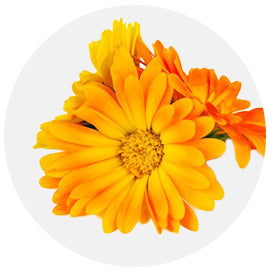 Pot Marigold Flower Extract