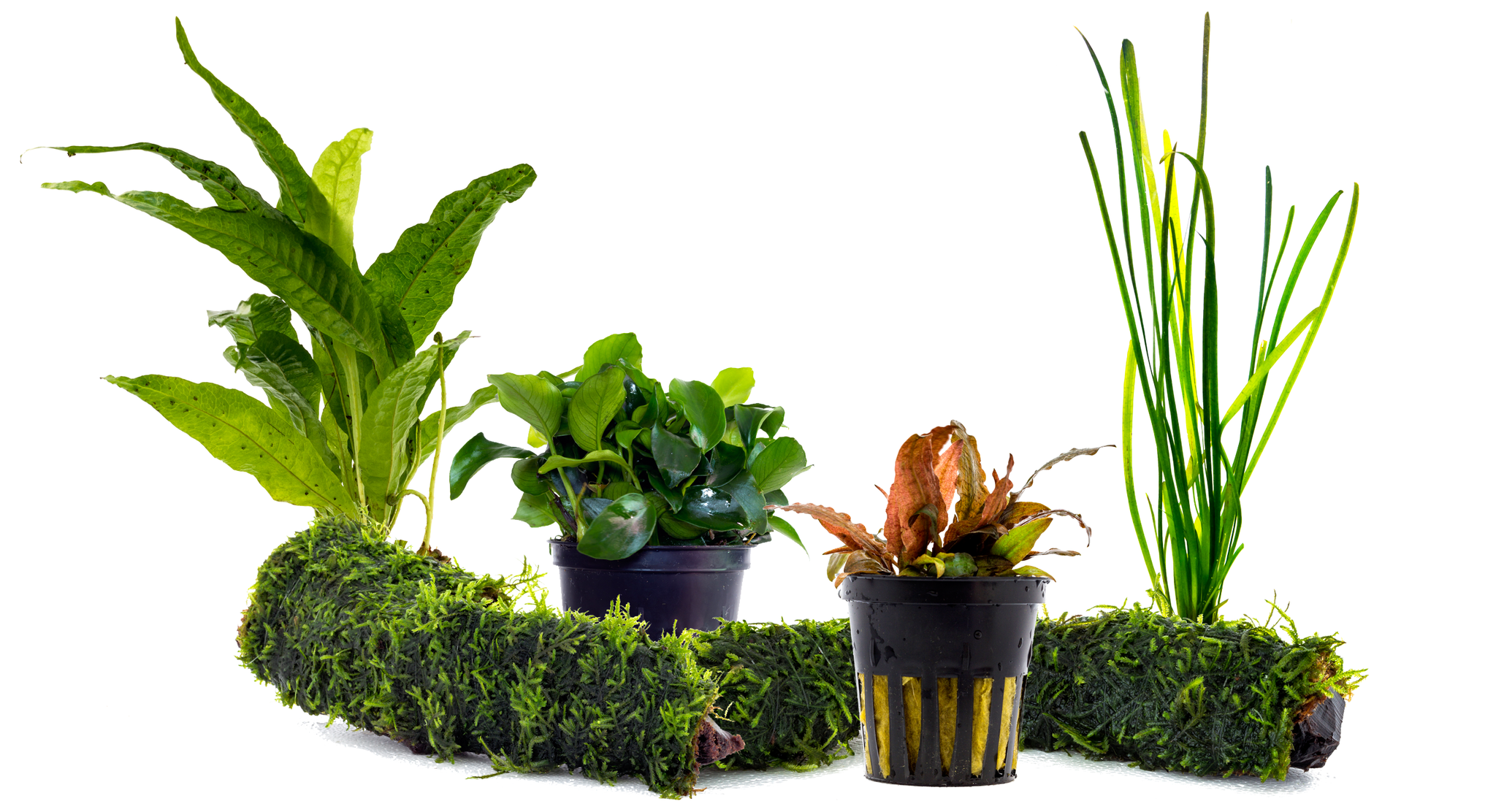 5 Easy Aquarium Plants for Beginners