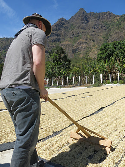 Raking drying coffee seeds