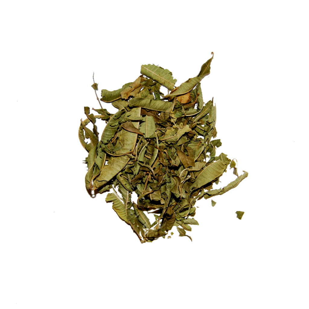 Lemon Verbena - The Herb Shop - Central Market - Lancaster, PA