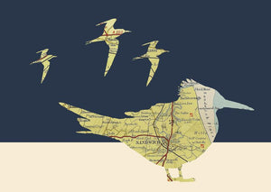 Kate Thornton Sandwich Terns print