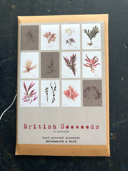 Molesworth & Bird Set of 12 British Seaweed Postcards