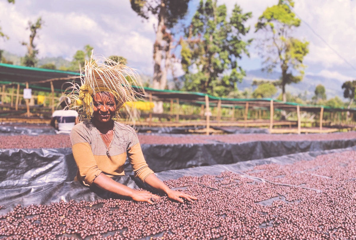 Bensa Natural: One of the best Ethiopian coffees we've ever roasted