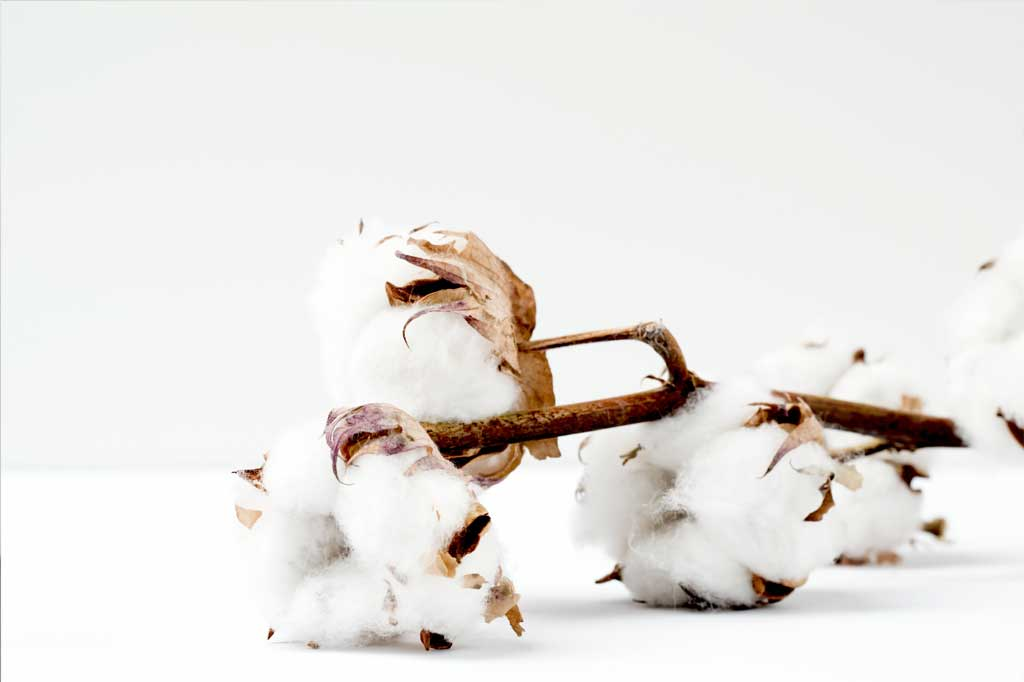 Why Do We Love Cotton?
