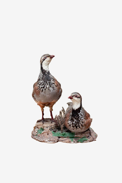 Vintage pair of partridge, Taxidermy, Vintage, Vintage Finds - Six and Sons