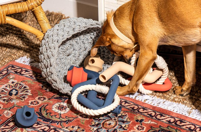 Dog Toys for Every Style of Play