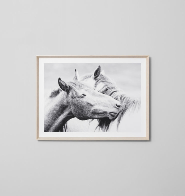 EQUINE KISS · FRAMED PRINT - The Banyan Tree Furniture & Homewares