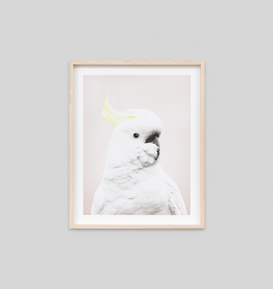 COCKATOO PINK · FRAMED PRINT