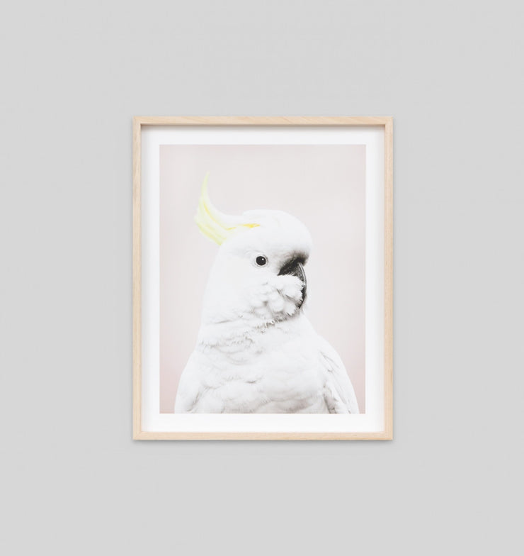 COCKATOO PINK · FRAMED PRINT - The Banyan Tree Furniture & Homewares