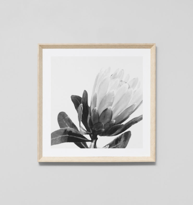 EVENING PROTEA GREY · FRAMED PRINT - The Banyan Tree Furniture & Homewares