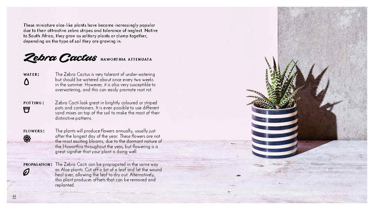 THE LITTLE BOOK OF CACTI - The Banyan Tree Furniture & Homewares