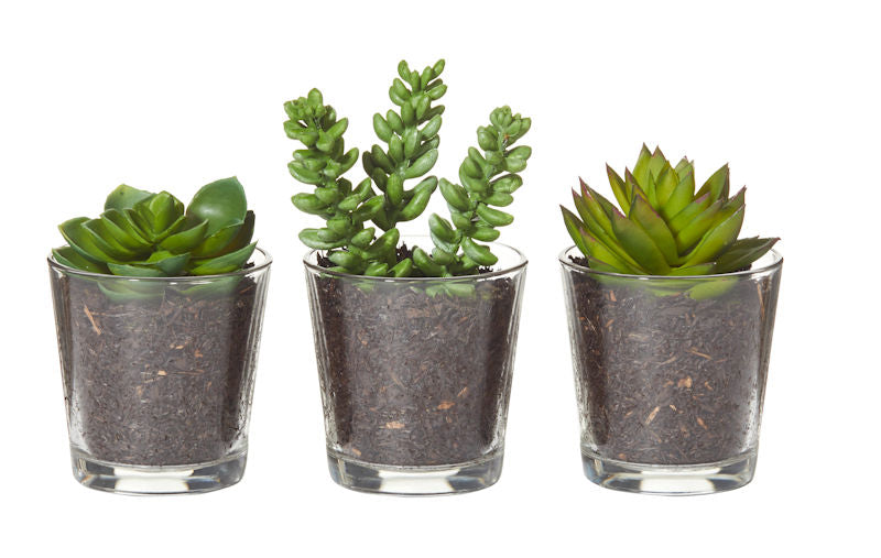 TAPERED VASE SUCCULENTS