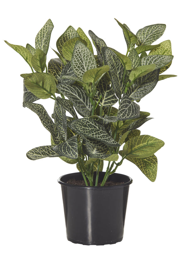 FAUX FITTONIA GARDEN POT