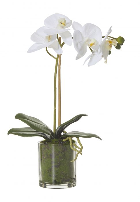 BUTTERFLY ORCHID MOSS GLASS POT - The Banyan Tree Furniture & Homewares