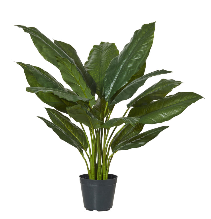SPATHIPHYLLUM PLANT - The Banyan Tree Furniture & Homewares