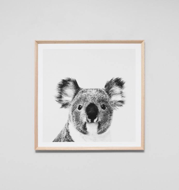 KOALA PORTRAIT · FRAMED PRINT - The Banyan Tree Furniture & Homewares