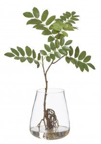 MOUNTAIN ASH- TUB VASE  LARGE - The Banyan Tree Furniture & Homewares
