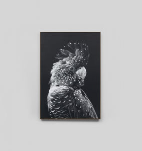 BLACK COCKATOO GREY · FRAMED CANVAS