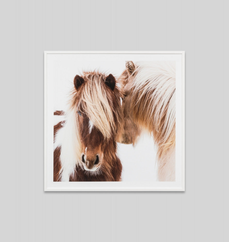 WINTER FOAL · FRAMED PRINT