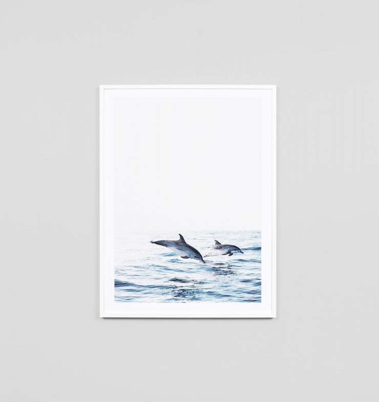 ATLANTIC DOLPHIN · FRAMED PRINT - The Banyan Tree Furniture & Homewares