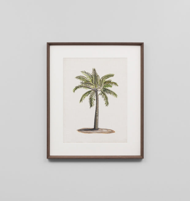 BRITISH PALMS 1 · FRAMED PRINT