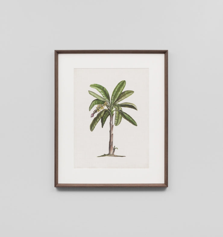 BRITISH PALMS 2 · FRAMED PRINT - The Banyan Tree Furniture & Homewares