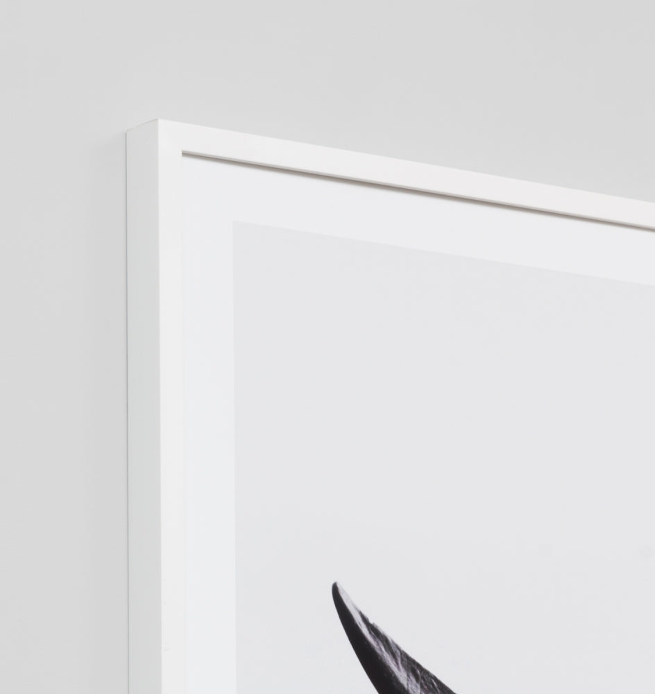 WHALE TAIL · FRAMED PRINT