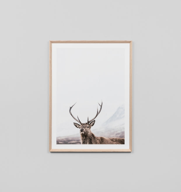 HIGHLAND DEER · FRAMED PRINT
