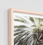 PALM WINDOW (SMALL) · FRAMED PRINT