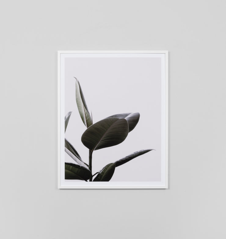 RUBBER TREE BLUSH 2 · FRAMED PRINT - The Banyan Tree Furniture & Homewares