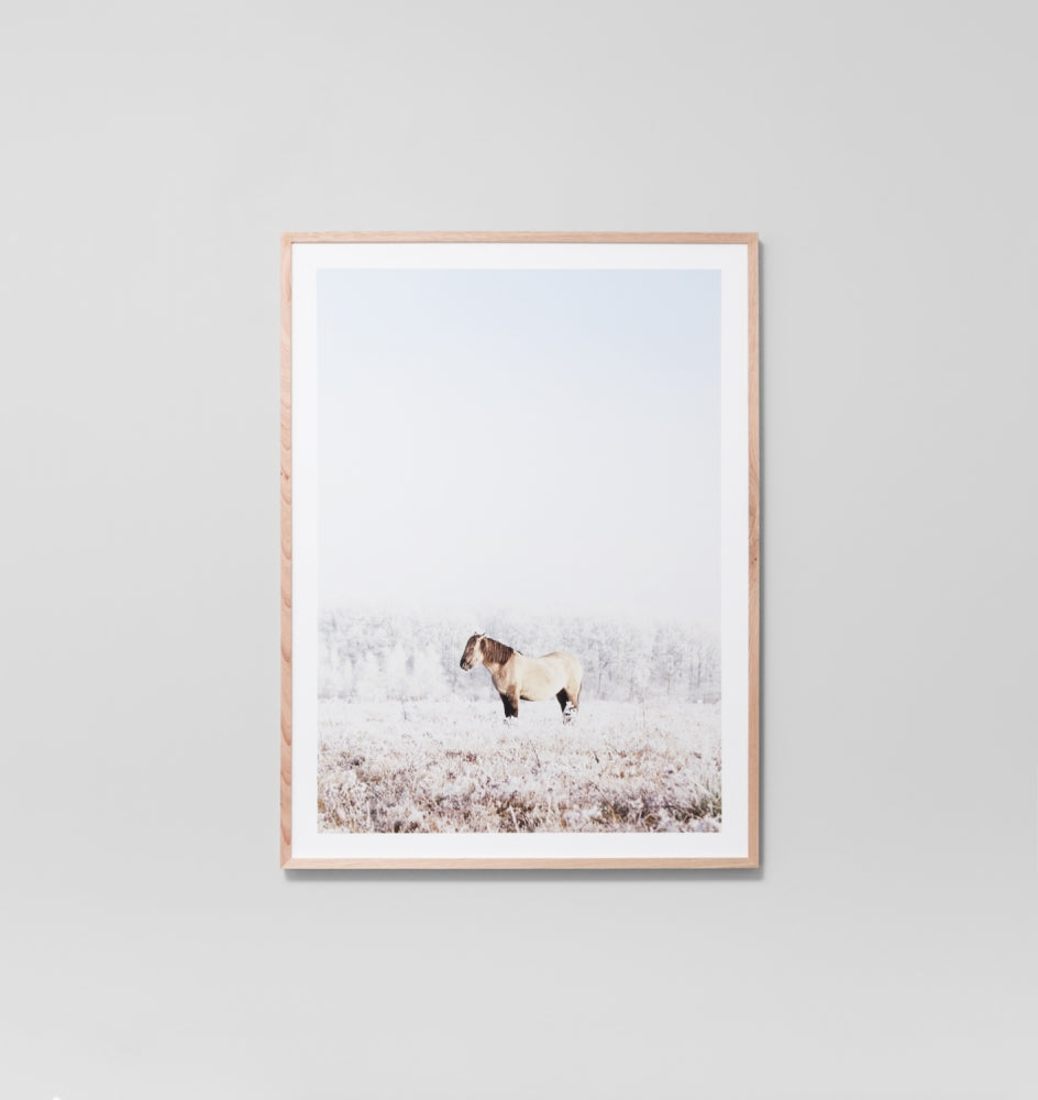 SNOW PONY · FRAMED PRINT