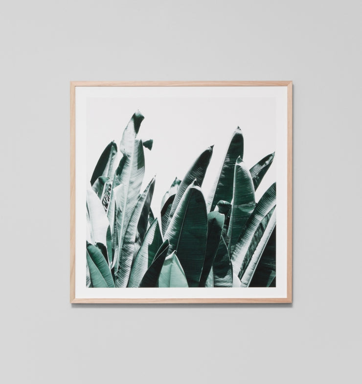 SUMMER LEAVES 1 · FRAMED PRINT - The Banyan Tree Furniture & Homewares