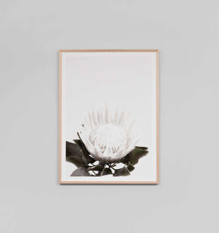 WHITE PROTEA · FRAMED PRINT - The Banyan Tree Furniture & Homewares